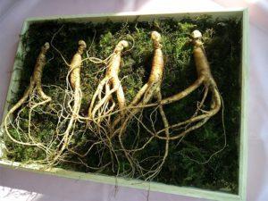 pestovanie na slovensku