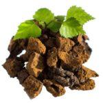 Čaga - Befungin drevokazná huba