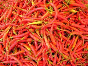Chilli papričky Chilliburner