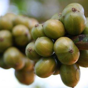 Zelená káva - nielen na chudnutie