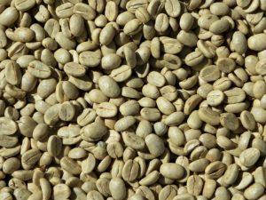 Zelená káva - kyselina chlorogénová