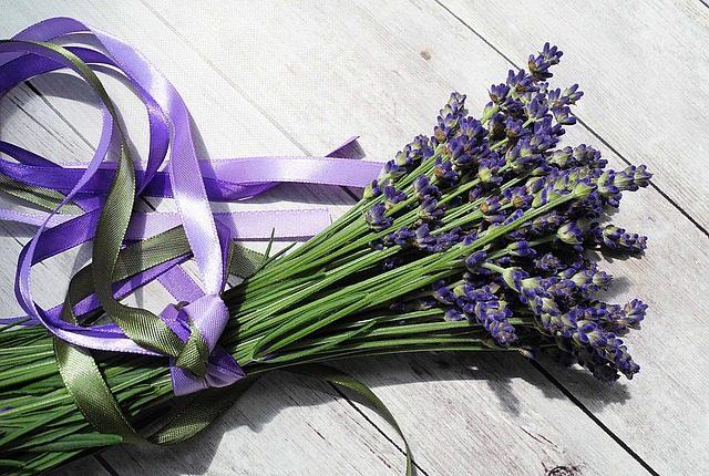 Levanduľa kvety