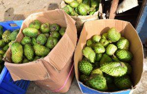 Graviola - ovocie, plody
