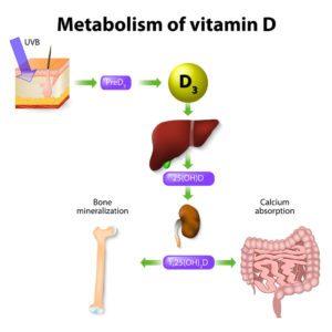 Metabolizmus vitamínu D