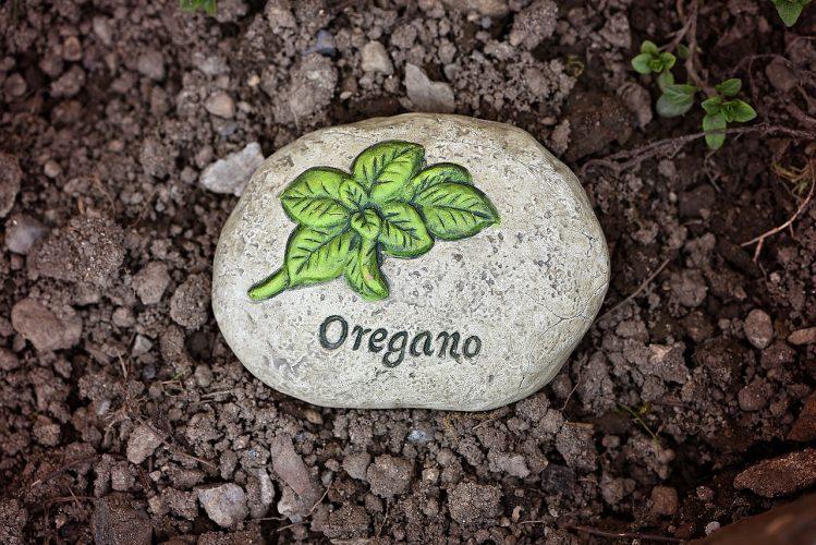 Oregáno - oregánový olej