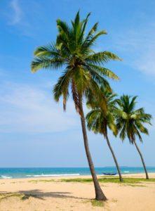 Kokosová palma - strom
