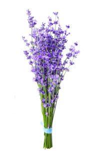 Levanduľové kvety a rastlina