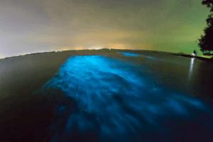 MSM prášok vznik z planktónu