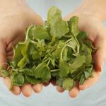 Kyselina listová - nevyhnutný vitamín pre každú bunku v tele (+ zoznam kvalitných prípravkov)
