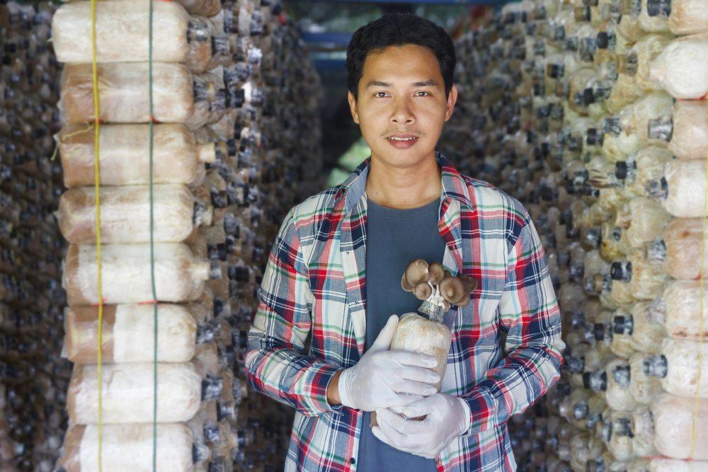 producenti hlivy z Ázie