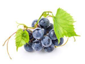 Vinis vinifera