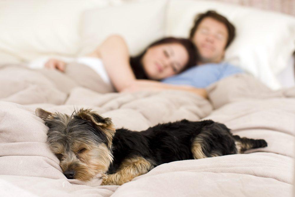 Prirodzený relaxačný spánok je základom zdravua