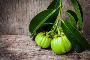 Garcinia cambogia - plod