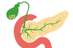 ilustrácia vyobrazujúca pankreas a žlčník